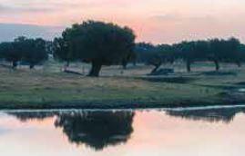 El Proyecto Transfronterizo para la Valorización Integral de la Dehesa PRODEHESA-MONTADO se presentará en Zafra el 29 de septiembre
