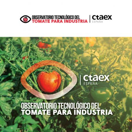 CTAEX participa en el 13 Congreso Mundial del Tomate mostrando el camino de la innovación del campo a la mesa