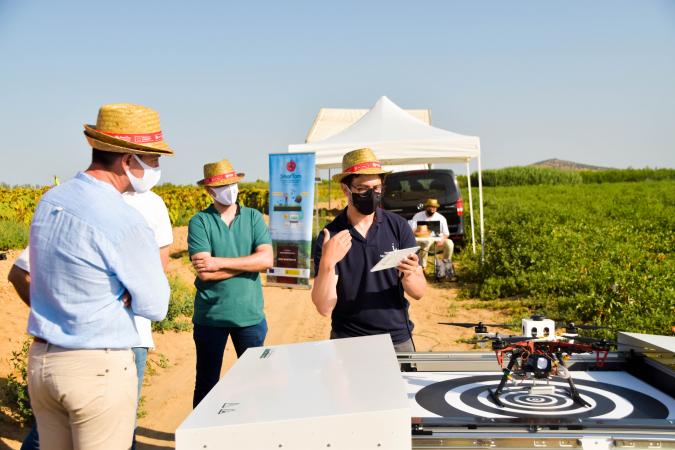 SMARTOM presenta conclusiones esperanzadoras para el cultivo del tomate industrial