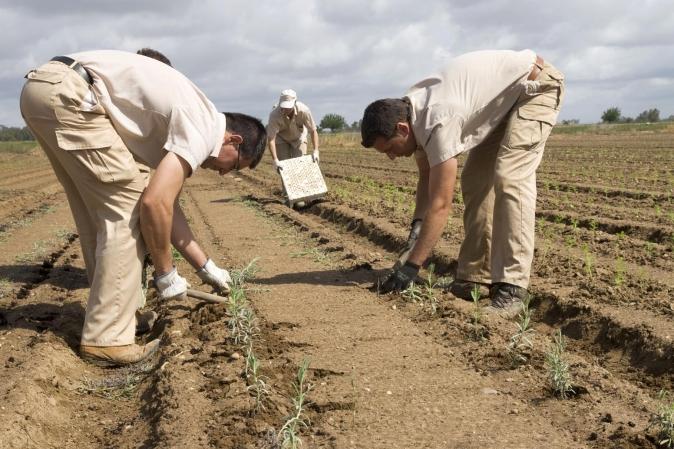 Ensayos agrícolas