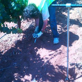 Toma de muestras de suelos en Tarancon - jul 2014