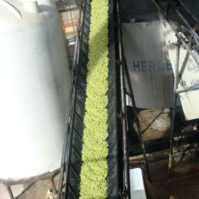 Extracción residuos brécol: Carga en el reactor