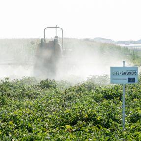 Aplicación de biocida en tomate