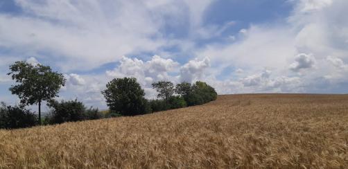 diversif paisaje